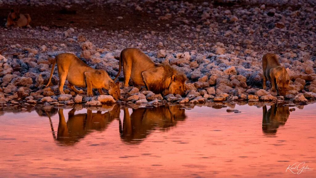 Fotografiereis met stop in Etosha, Namibië