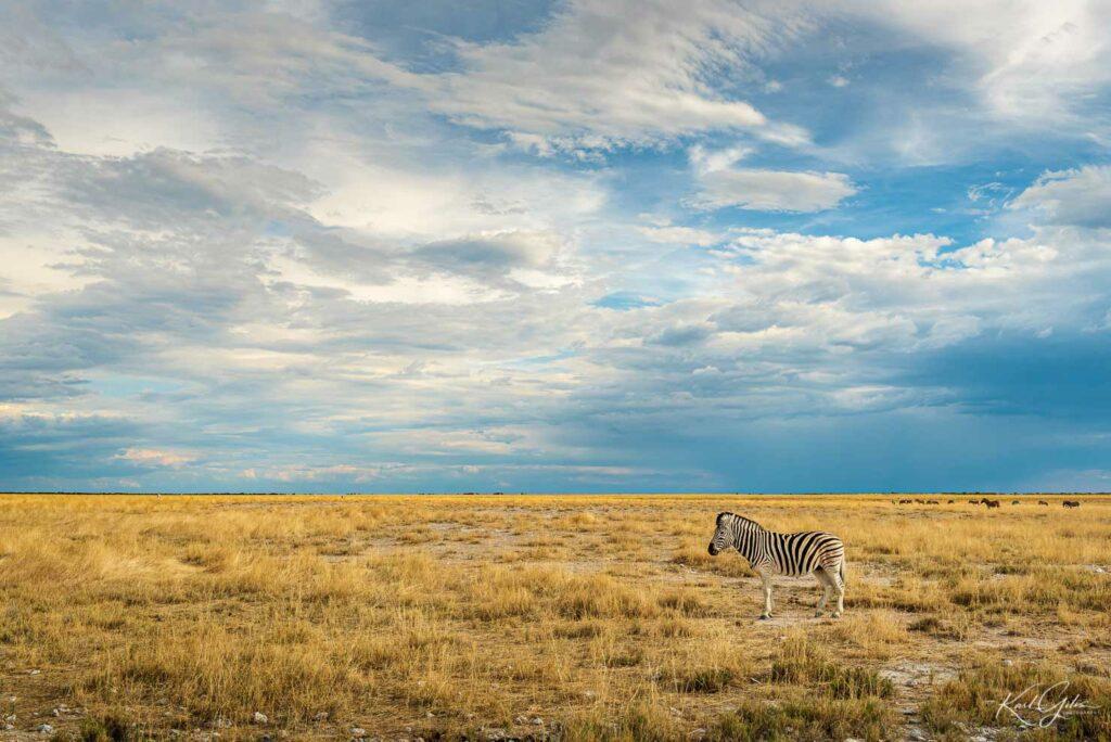 Fotografiereis Namibië, zebra in Etosha
