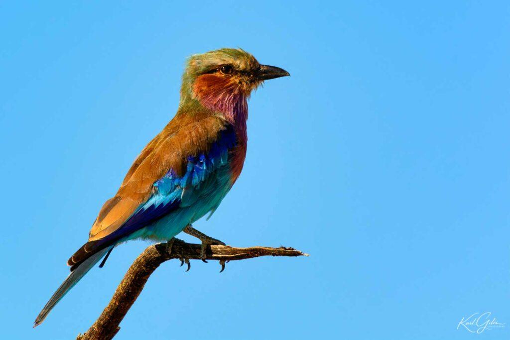 Fotografiereis Namibië met aandacht voor vogels