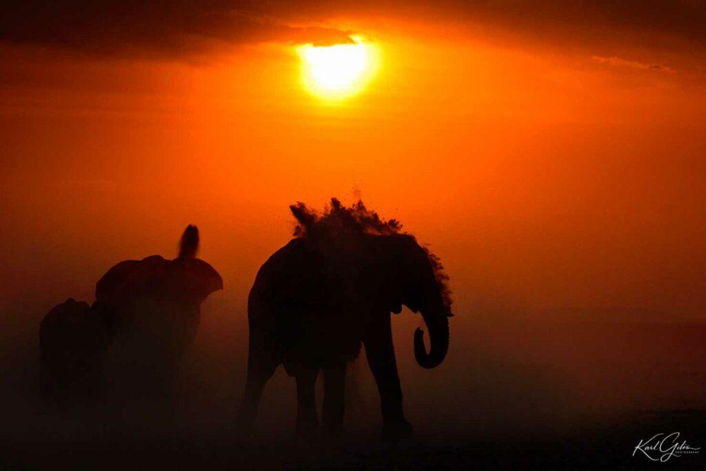 Fotoreis door Namibië in Afrika, olifanten bij zonsondergang