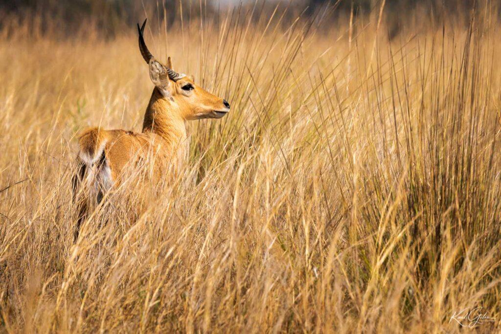 Fotoreis voor beginners door Namibië