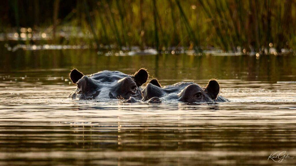 Fotoreis met focus op wilde dieren door Namibië
