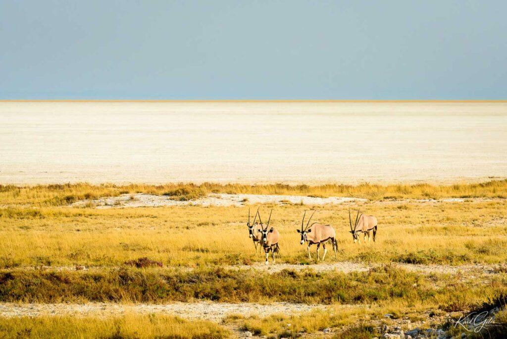 Fotoreis naar Etosha, Namibië