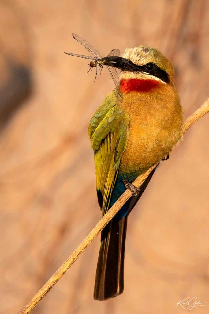 De fotoreis door Namibië focust ook op birds