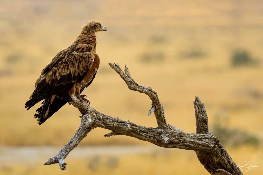 Fotoreis Namibië met focus op vogels en wildlife