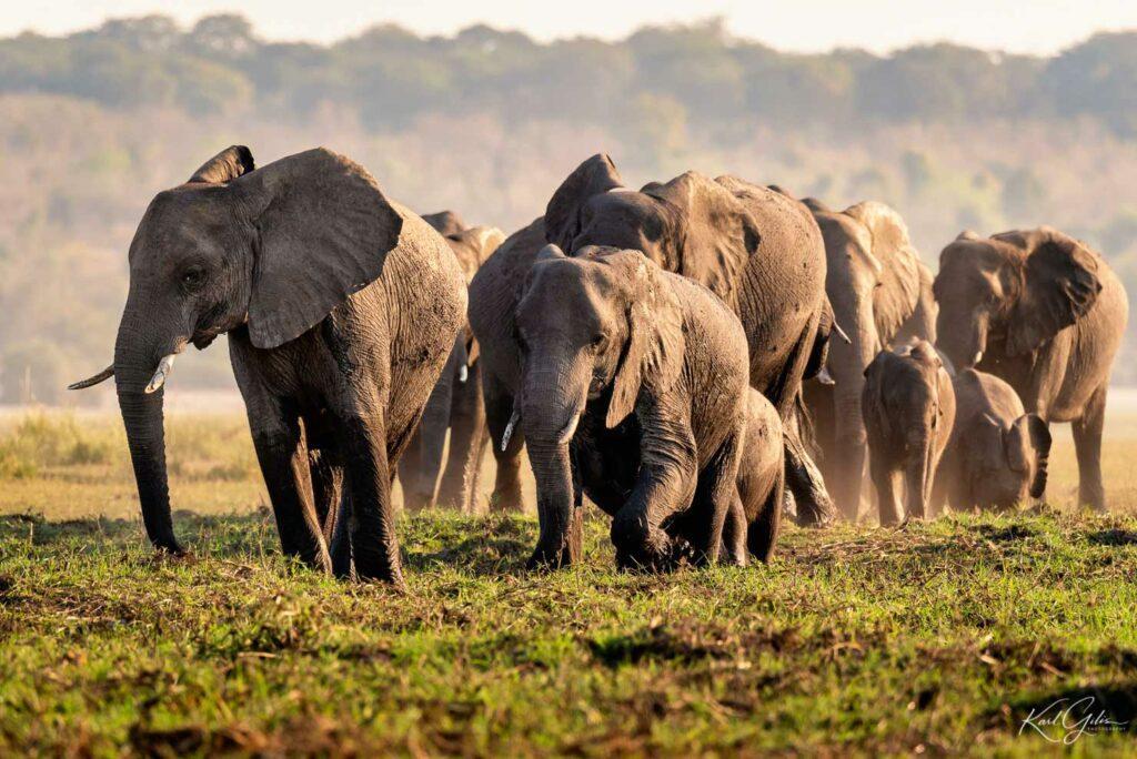 De fotoreis safari stopt in Chobe in Botswana