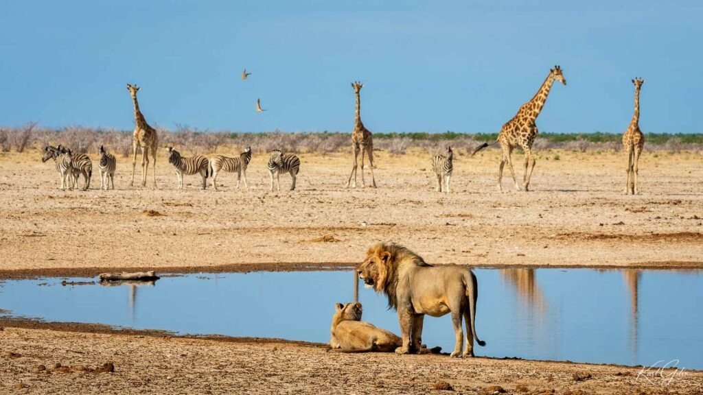 Fotosafari door Namibië, Etosha