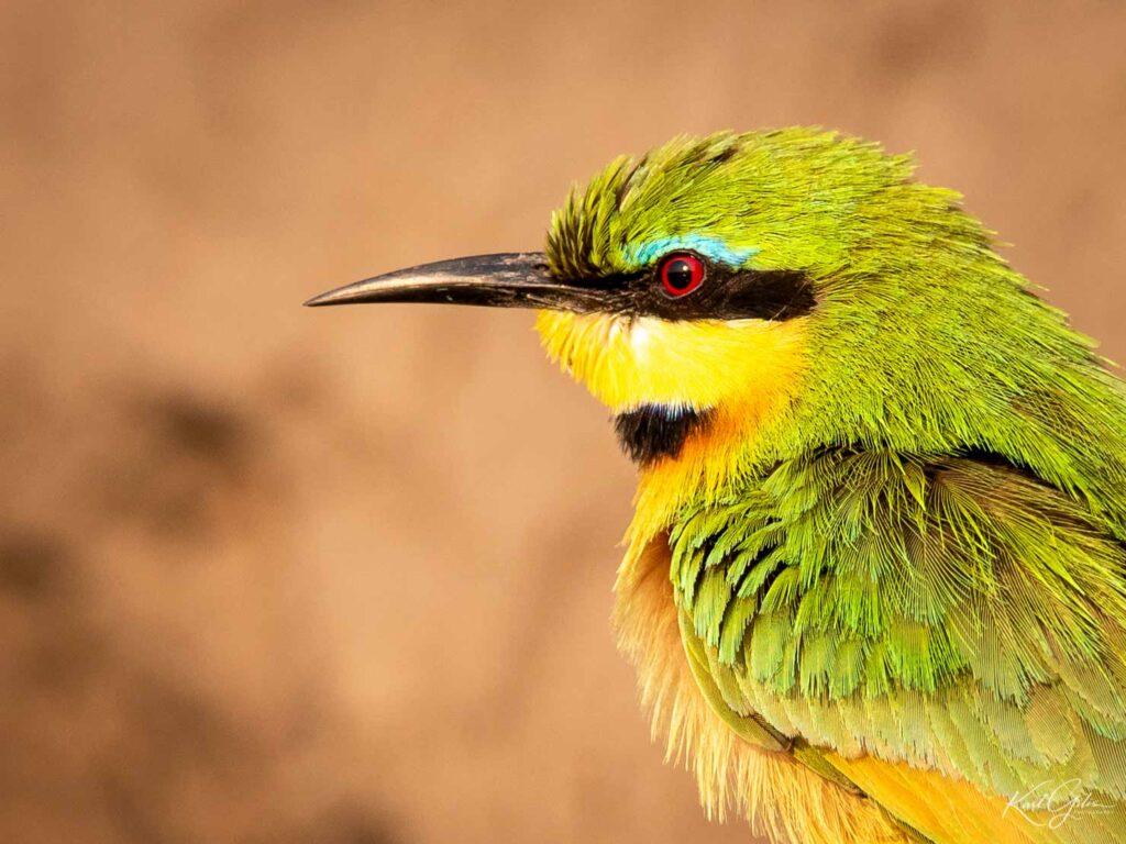 Vogelreis fotografie Namibië Bijeneter